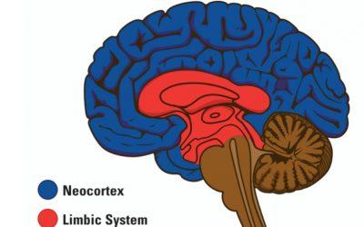 Psychology Today: Help, I Don't Speak Limbic!