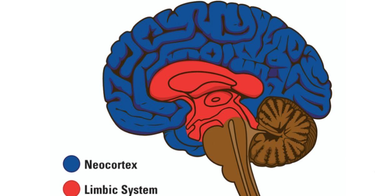 psychology today limbic