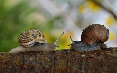 Self-Reg Snails: Finding Love In Unexpected Places