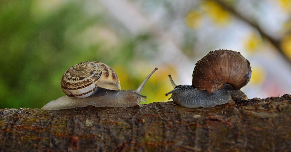 Self-Reg Snails